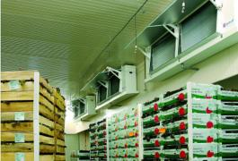 Овощехранилища. Холодильные и морозильные камеры